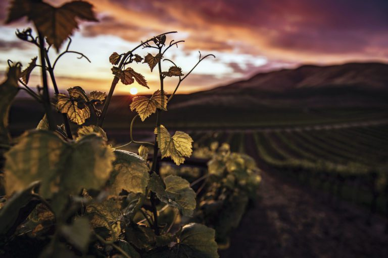 Pinot Grigio or Pinot Gris. What's the difference?