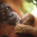 Saving Sumatra